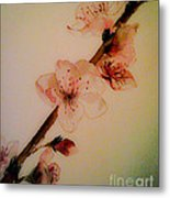 Flowers - Cherry Blossoms - Blooms Metal Print
