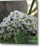 Flowers Close-up Metal Print