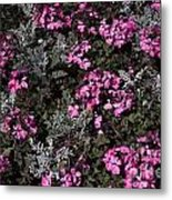 Flowers Dallas Arboretum V16 Metal Print