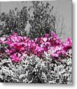 Flowers Dallas Arboretum V17 Metal Print