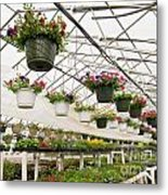 Flowers Growing In Foil Hothouse Of Garden Center Metal Print