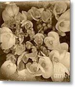 Flowers In Sepia Metal Print
