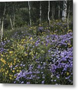 Flowers In The Aspen Forest Metal Print