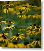 Flowers In The Fields Metal Print