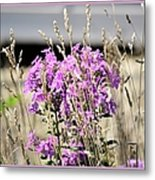Flowers In The Grass 8891 Metal Print
