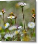 Flowers In The Hight Mountains. Metal Print