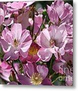 Flowers- Mass Roses Metal Print