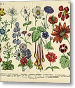 Flowers Of The Garden, Victorian Metal Print