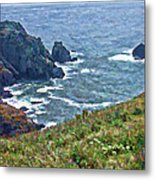 Flowers On Isle Of Guernsey Cliffs Metal Print
