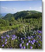 Flowers On Summer Mountain  Metal Print