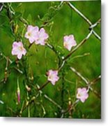 Flowers... On The Fence Metal Print