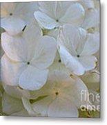 Snowball Flowers Metal Print
