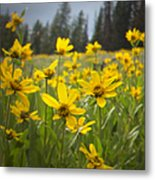 Flowers That Are Wild Metal Print