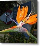 Flowers - Us Botanic Garden - 011311 Metal Print