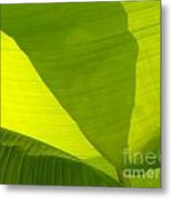 Flowing Banana Leaf Metal Print