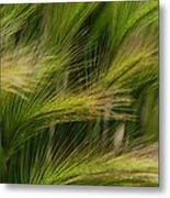 Flowing Grasses Metal Print