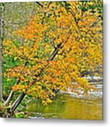 Flowing River Leaning Tree Metal Print