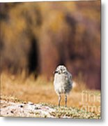 Fluffball Watching Metal Print by Anne Gilbert