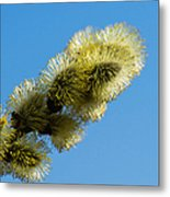 Fluffy Spring - 1 - Featured 3 Metal Print