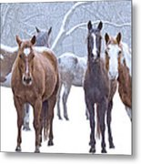 Flurries Metal Print