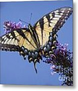 Fluted Swallowtail Metal Print