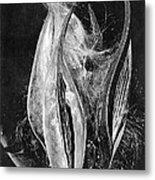 Fly Away Seeds Metal Print