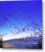 Fly By At Sunset Metal Print