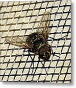 Fly From The Series The Imprint Of Man In Nature Metal Print
