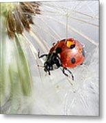 Fly Ladybug. Fly Metal Print