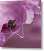 Fly On A Rhododendron Metal Print