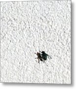 Fly On A Wall Metal Print