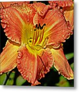 Fly On The Daylily Metal Print