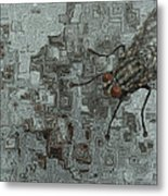 Fly On The Wall Metal Print by Jack Zulli