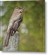 Flycatcher In Southern Missouri Metal Print