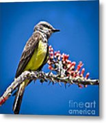 Flycatcher Metal Print