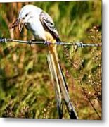 Flycatcher With A Meal Metal Print