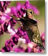 Flying At Attention Metal Print