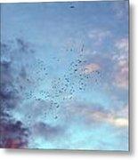 Flying Birds At Sunset Metal Print