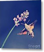 Flying Metal Print