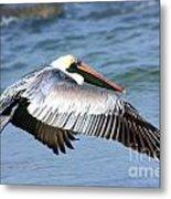 Flying Florida Pelican Metal Print
