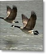 Flying Free Metal Print by Frederic Vigne