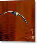 Flying Gull On Fall Color Metal Print