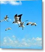 Flying Gulls Metal Print