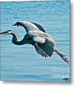 Flying Heron Metal Print