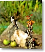 Flying Hummingbird Metal Print