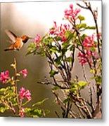 Flying Hummingbird Sipping Nectar Metal Print