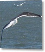 Flying On A Breeze Metal Print