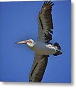 Flying Pelican 3 Metal Print