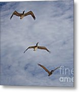 Flying Pelicans Metal Print
