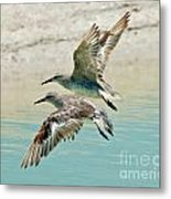 Flying Pipers Metal Print